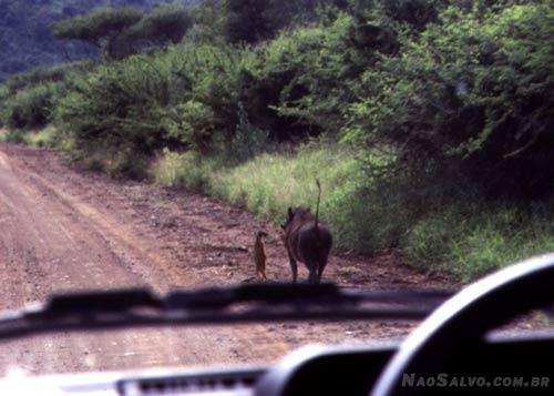 Timão e Pumba realmente existem...